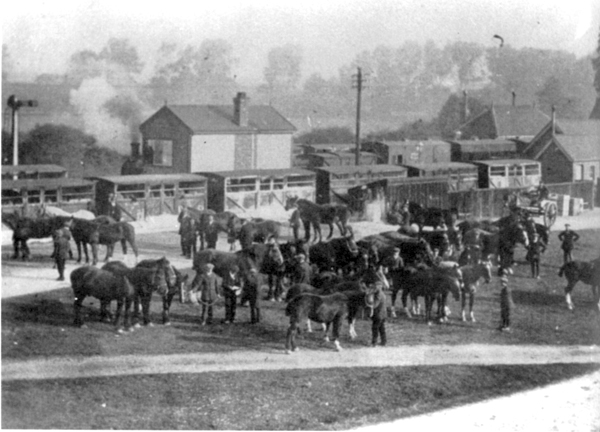 Horses at Winslow Station