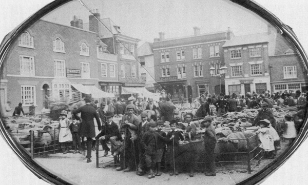 Sheep fair on Market Square c1896