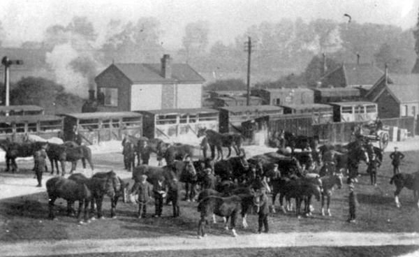 Horses at Winslow Station, c.1915
